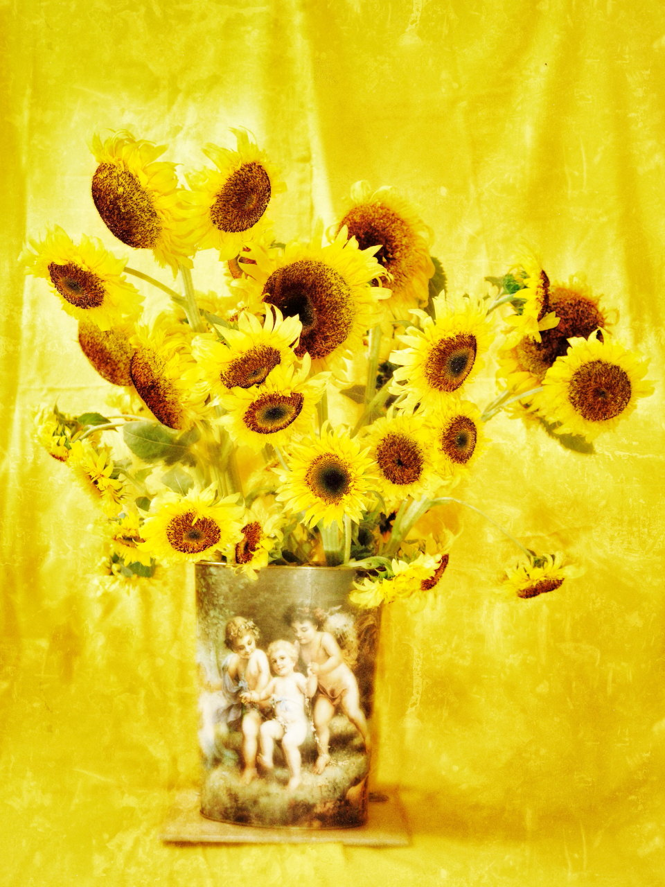 (P+R) Photography [ Sunflower to Van Gogh ]